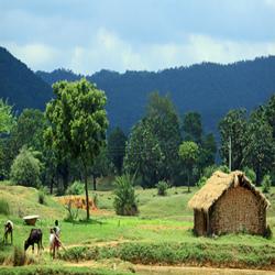 全球有机大会二三事:有机走廊,全产业链和社区农业的发展