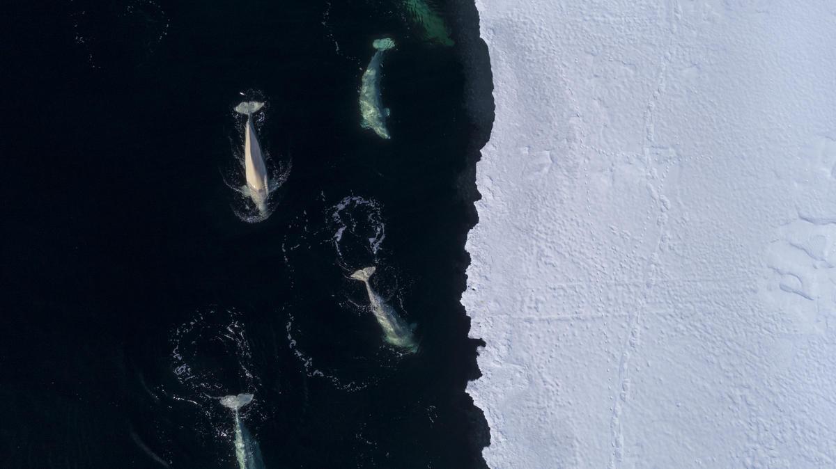 """""""气候危机也是海洋危机""""——联合国政府间气候变化专门委员会(IPCC)最新报告强调气候对海洋和冰冻圈的威胁"""